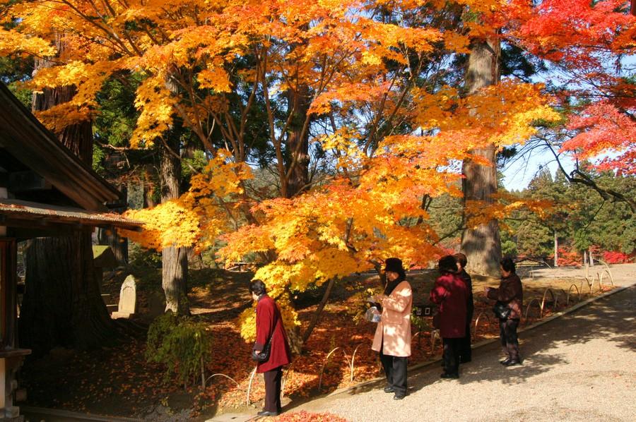 毛越寺の画像 p1_36